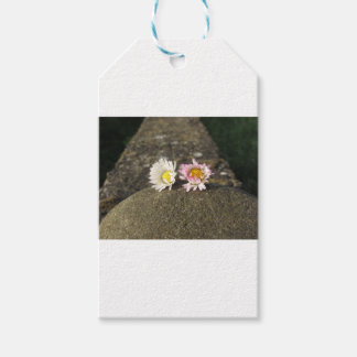 Two white daisies lying on the stone at sunset gift tags