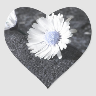 Two white daisies lying on the stone at sunset heart sticker