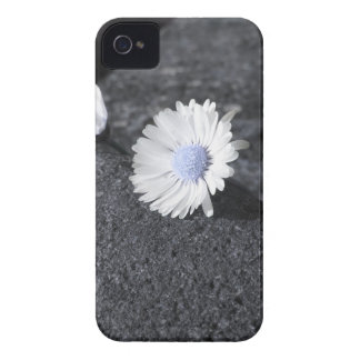 Two white daisies lying on the stone at sunset iPhone 4 case