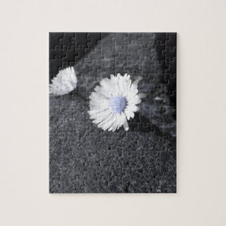 Two white daisies lying on the stone at sunset jigsaw puzzle
