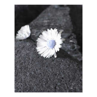 Two white daisies lying on the stone at sunset letterhead