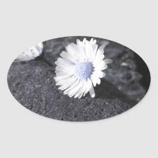 Two white daisies lying on the stone at sunset oval sticker