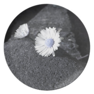 Two white daisies lying on the stone at sunset plate