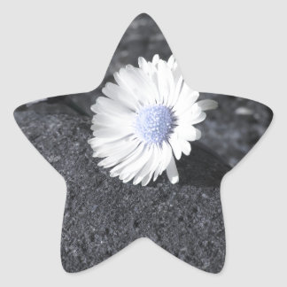 Two white daisies lying on the stone at sunset star sticker