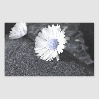 Two white daisies lying on the stone at sunset sticker
