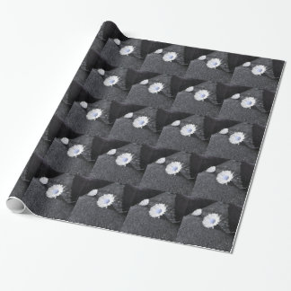 Two white daisies lying on the stone at sunset wrapping paper