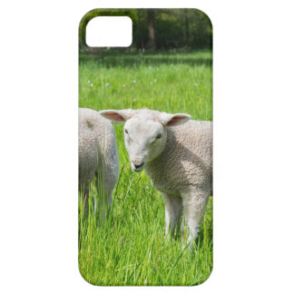 Two white dutch sheep in green spring meadow iPhone 5 cases