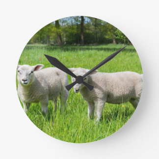 Two white dutch sheep in green spring meadow round clock