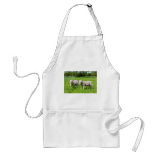 Two white dutch sheep in green spring meadow standard apron