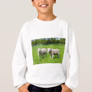 Two white dutch sheep in green spring meadow sweatshirt