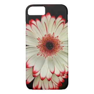Two White Gerbera Daisies Case-Mate iPhone Case