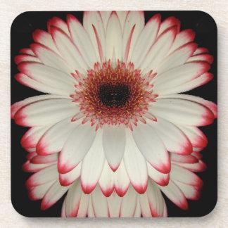 Two White Gerbera Daisy Flowers Coaster