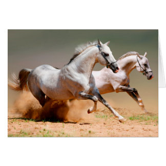 two white horses running card
