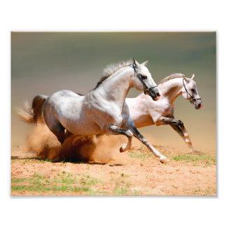 two white horses running photo art