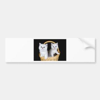 Two white kittens in basket on black background.JP Bumper Sticker