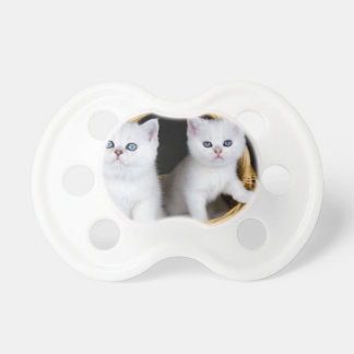 Two white kittens in basket on black background.JP Pacifier