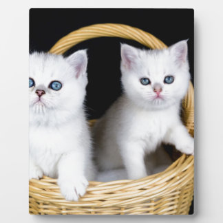 Two white kittens in basket on black background.JP Plaque