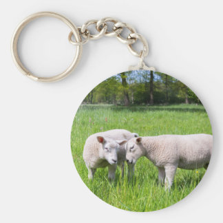 Two white lambs playing together in green meadow basic round button keychain