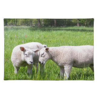 Two white lambs playing together in green meadow placemat