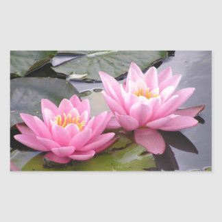 Two wild pink waterlilies in a pond sticker