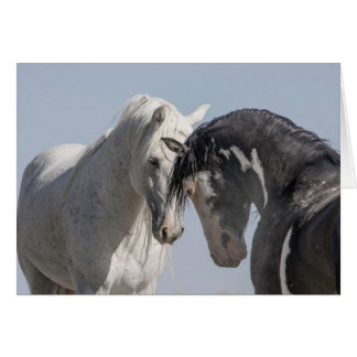 Two Wild Stallions Meet - Wild Horse Greeting Card