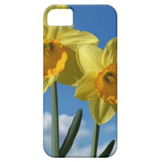 Two yellow Daffodils 2.2 Case For The iPhone 5