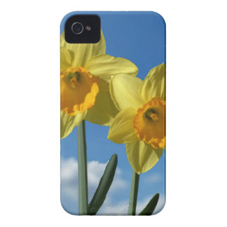 Two yellow Daffodils 2.2 Case-Mate iPhone 4 Cases