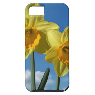 Two yellow Daffodils 2.2 iPhone 5 Case