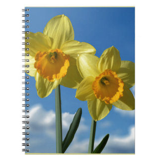 Two yellow Daffodils 2.2 Note Book