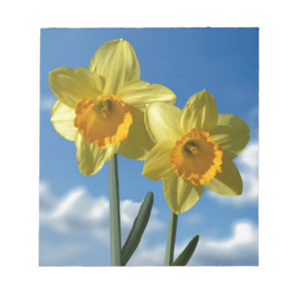 Two yellow Daffodils 2.2 Notepad