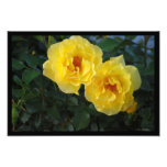 Two Yellow Roses Art Photo