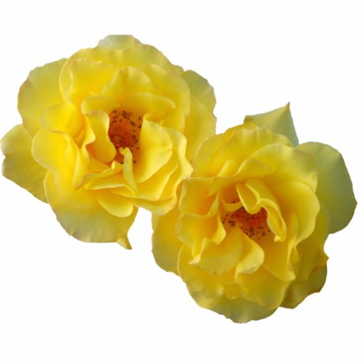 Two Yellow Roses Cut Outs