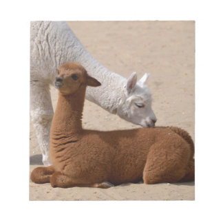 Two young alpacas notepad
