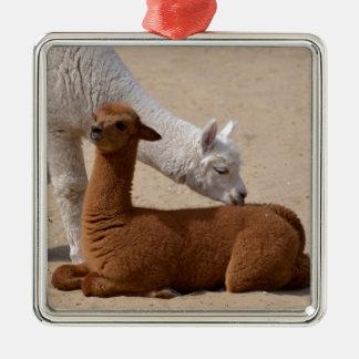 Two young alpacas Silver-Colored square ornament