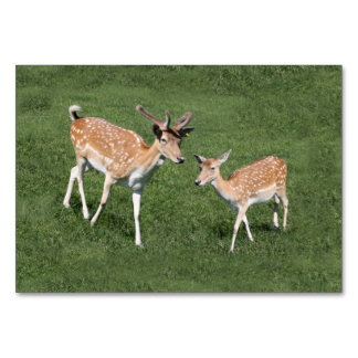 Two Young Deer Card