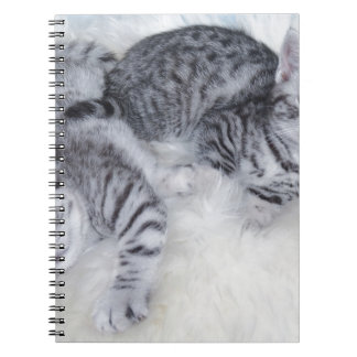 Two young tabby cats lying lazy together on fur note books