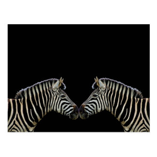 Two Zebras Nose to Nose Postcard