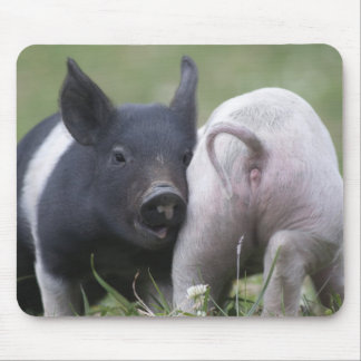 Twp Baby Pigs; Cute Piglets in Grassy Field Mouse Pad