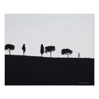 Typical trees in Tuscany Poster