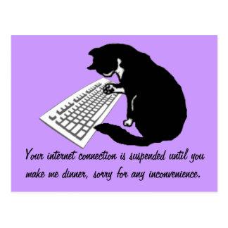 Typing Cat Postcard