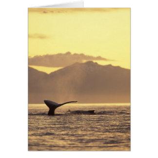 U.S.A., Alaska, Inside Passage Humpback whale at Card