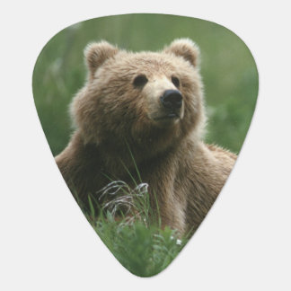 U.S.A., Alaska, Kodiak Two sub-adult brown bears Guitar Pick