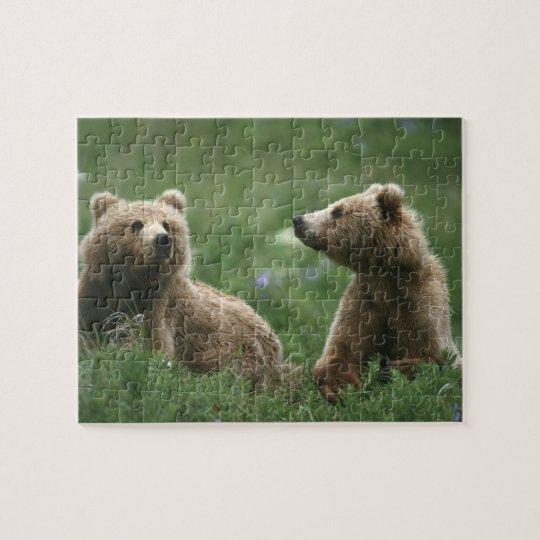 U.S.A., Alaska, Kodiak Two sub-adult brown bears Jigsaw Puzzle