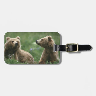 U.S.A., Alaska, Kodiak Two sub-adult brown bears Luggage Tag