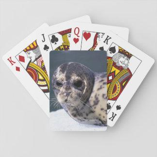 U.S.A., Alaska, Le Conte Glacier Close-up of Poker Deck