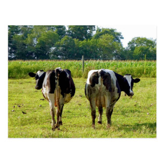 Udder Viewpoints Post Cards