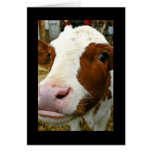 Udderly Cool Aunt Mother's Day With Cow Greeting Card