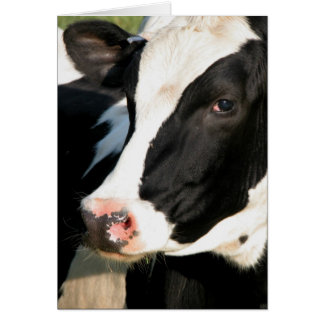 Udderly Happy Birthday Card