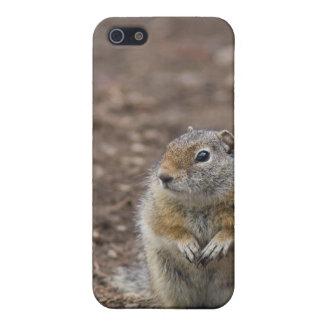 Uinta Groud Squirrel Case For iPhone 5/5S