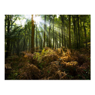 UK, England. Rays of sunlight streaming through Postcard